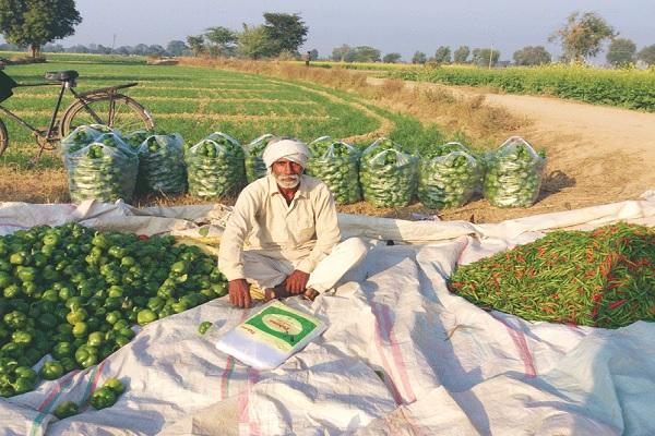 Inovasi Usaha di Desa yang Menjanjikan untuk Masa Depan (rotarynewsonline.org)